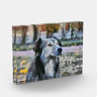 Dog painting award