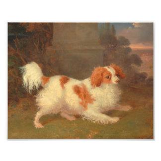 dog painting Blenheim spaniel Photo Print