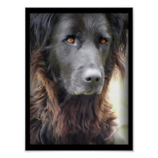 dog painting poster
