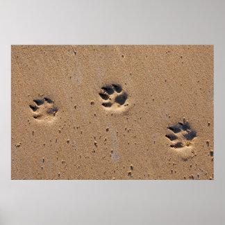 Dog paw prints on a sandy beach poster