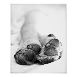 Dog Paws Posters