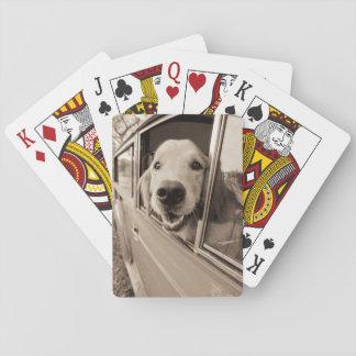 Dog Peeking Out a Car Window Card Decks