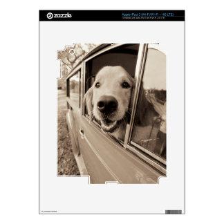Dog Peeking Out a Car Window Skins For iPad 3