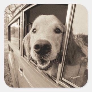 Dog Peeking Out a Car Window Square Sticker