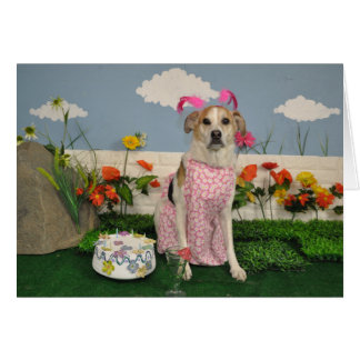 Dog photo/birthday cake/dog in dress, silly outfit card