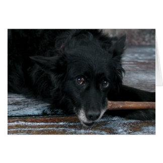 Dog photo card - Toto