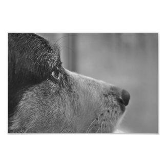 dog photo print