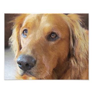 Dog Photo Print, Kodak Professional