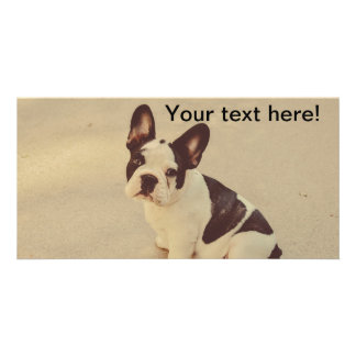 Dog Photo Cards