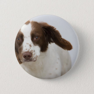 dog pinback button