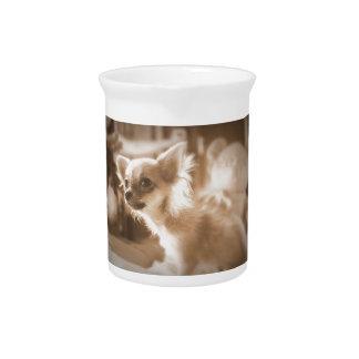 dog pitcher