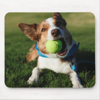 Dog Playing with its ball Mouse Pad
