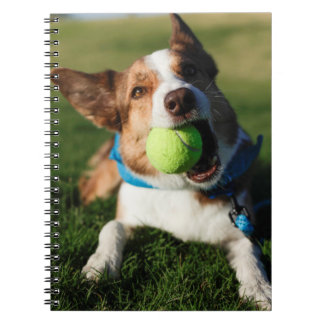 Dog Playing with its ball Spiral Notebook