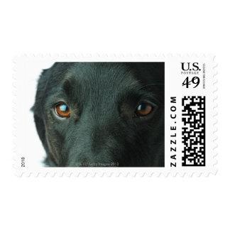 Dog portrait close up postage