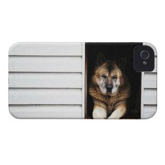dog portrait iPhone 4 Case-Mate case