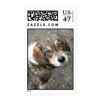 Dog portrait stamp
