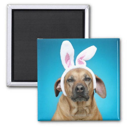 Dog portrait wearing Easter bunny ears Magnet