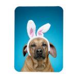 Dog portrait wearing Easter bunny ears Vinyl Magnet