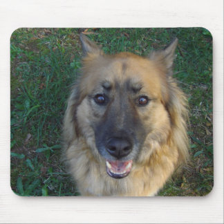 dog posing outside for picture mouse pad