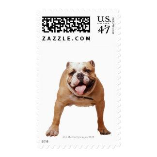 ,dog postage