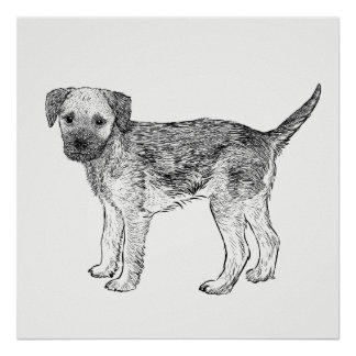 Dog Poster / Wall Art Border Terrier