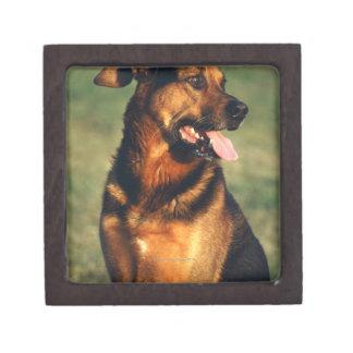 dog premium gift boxes