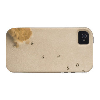 Dog Prints on Carpet Case-Mate iPhone 4 Cover