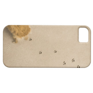 Dog Prints on Carpet iPhone 5 Covers