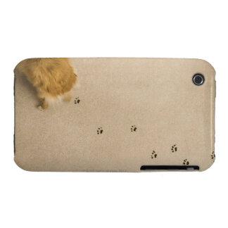 Dog Prints on Carpet iPhone 3 Cases