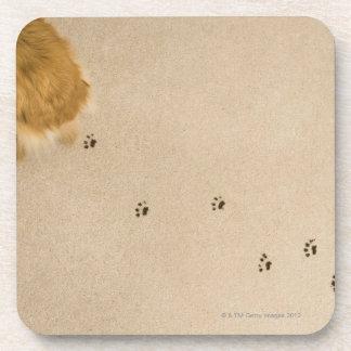 Dog Prints on Carpet Drink Coaster