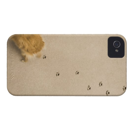 Dog Prints on Carpet iPhone 4 Cover