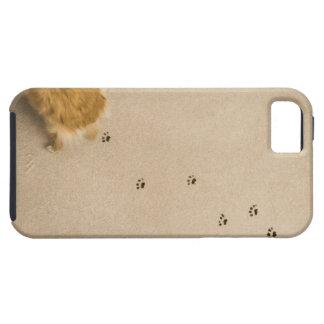 Dog Prints on Carpet iPhone SE/5/5s Case