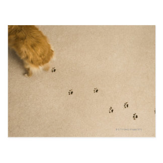 Dog Prints on Carpet Postcard
