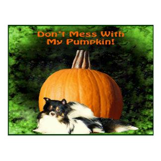 Dog Protecting Large Pumpkin Postcard