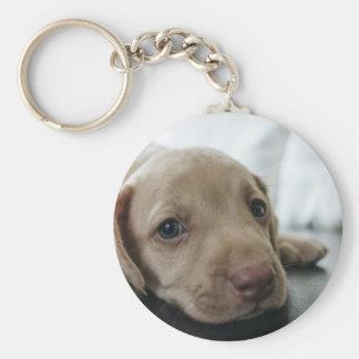Dog Puppy Blue Eyes Blue Eye Pet Look Cute Keychain