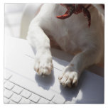 Dog putting his hands on a laptop ceramic tiles