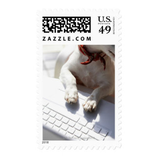 Dog putting his hands on a laptop postage