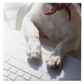 Dog putting his hands on a laptop large square tile