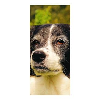 Dog Custom Rack Cards