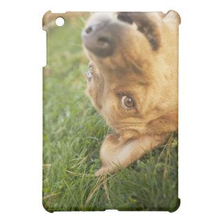 Dog rolling on back iPad mini cases