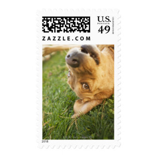 Dog rolling on back postage