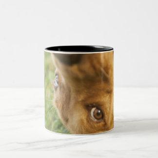 Dog rolling on back Two-Tone coffee mug