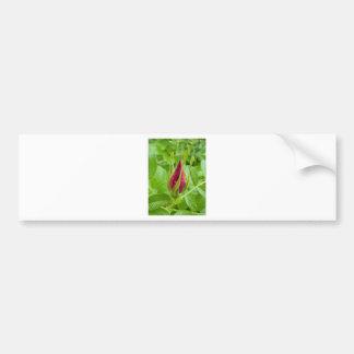 Dog Rose Flower Bumper Sticker