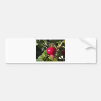 Dog Rose of the hedge Bumper Stickers