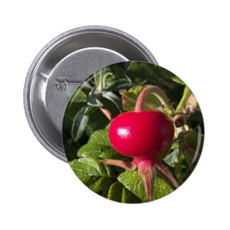 Dog Rose of the hedge Pinback Buttons