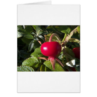 Dog Rose of the hedge Card