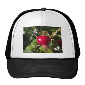 Dog Rose of the hedge Trucker Hats