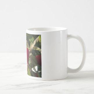 Dog Rose of the hedge Coffee Mugs