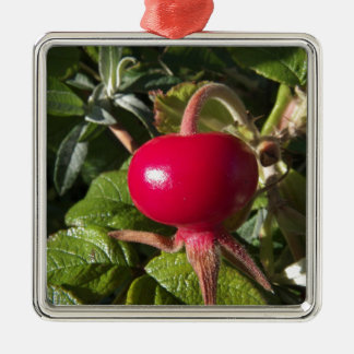 Dog Rose of the hedge Silver-Colored Square Decoration