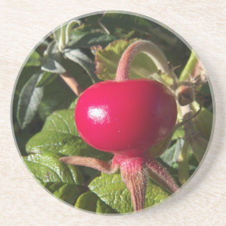 Dog Rose of the hedge Sandstone Coaster